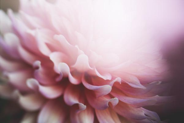 flowers-2609349_1920