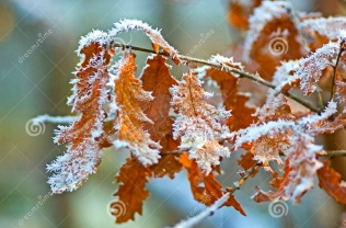 winter debridement from Dreamstime